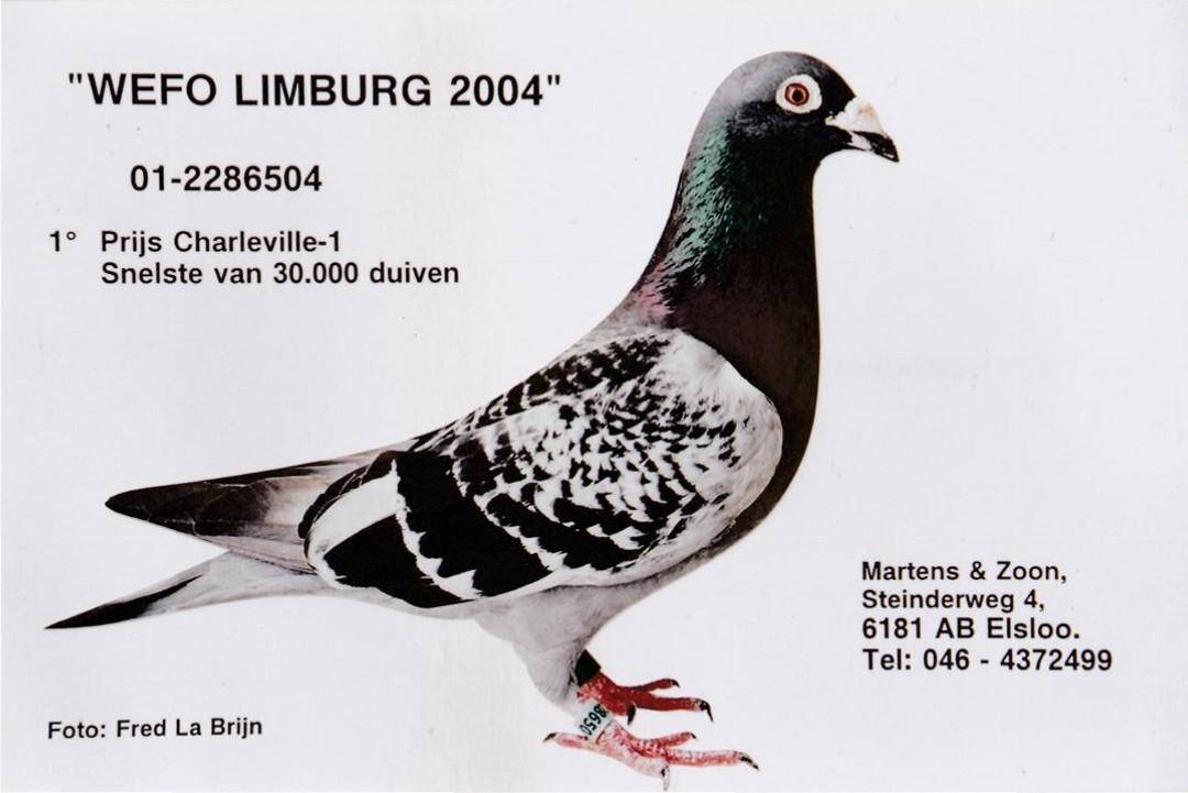 NL01-2286504