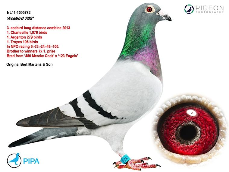 NL11-1005782