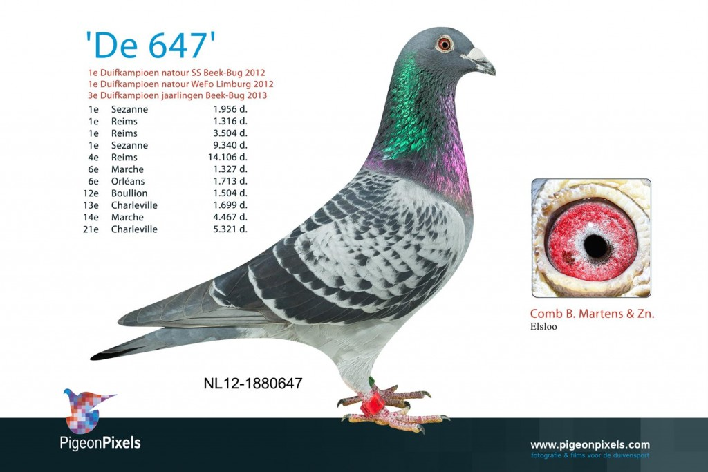 NL12-1880647