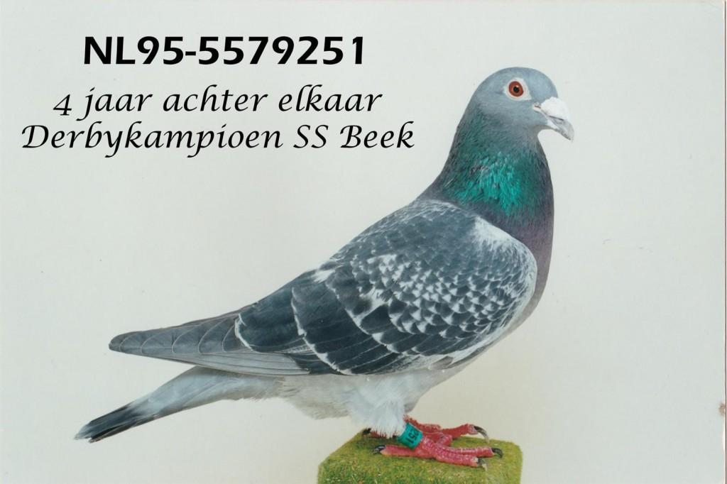NL95-5579251_bewerkt