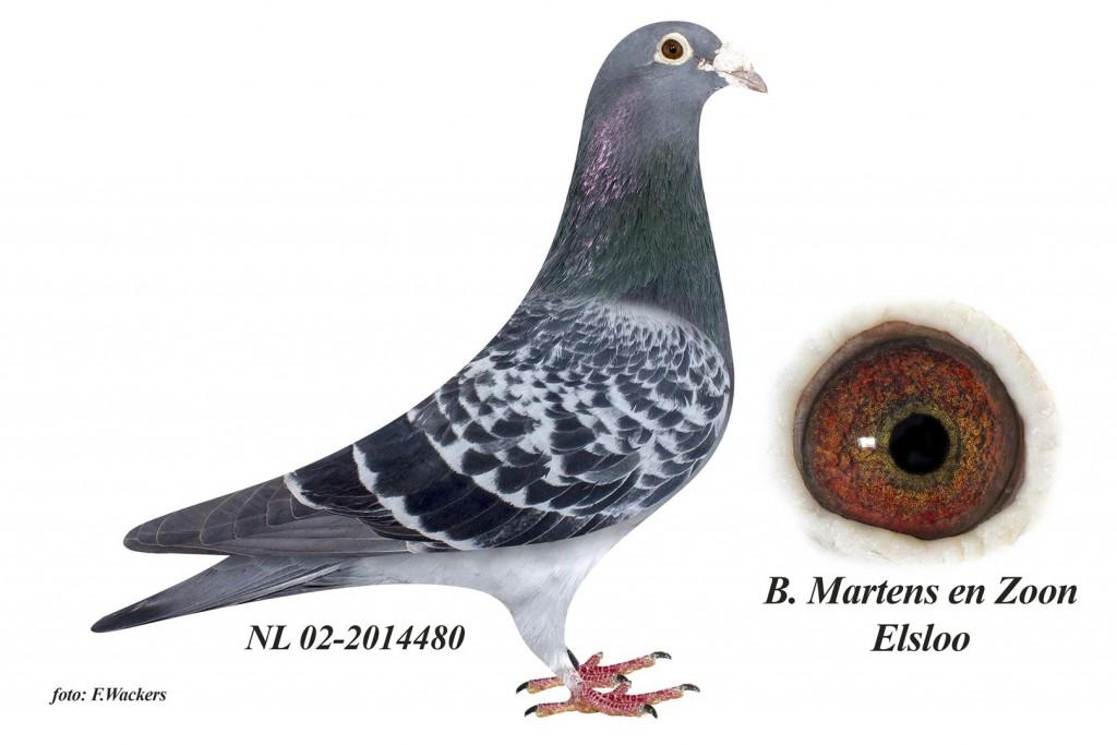 NL02-2014480