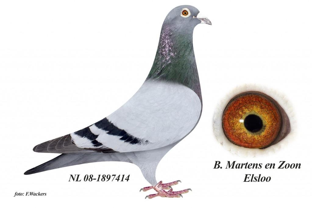 NL08-1897414