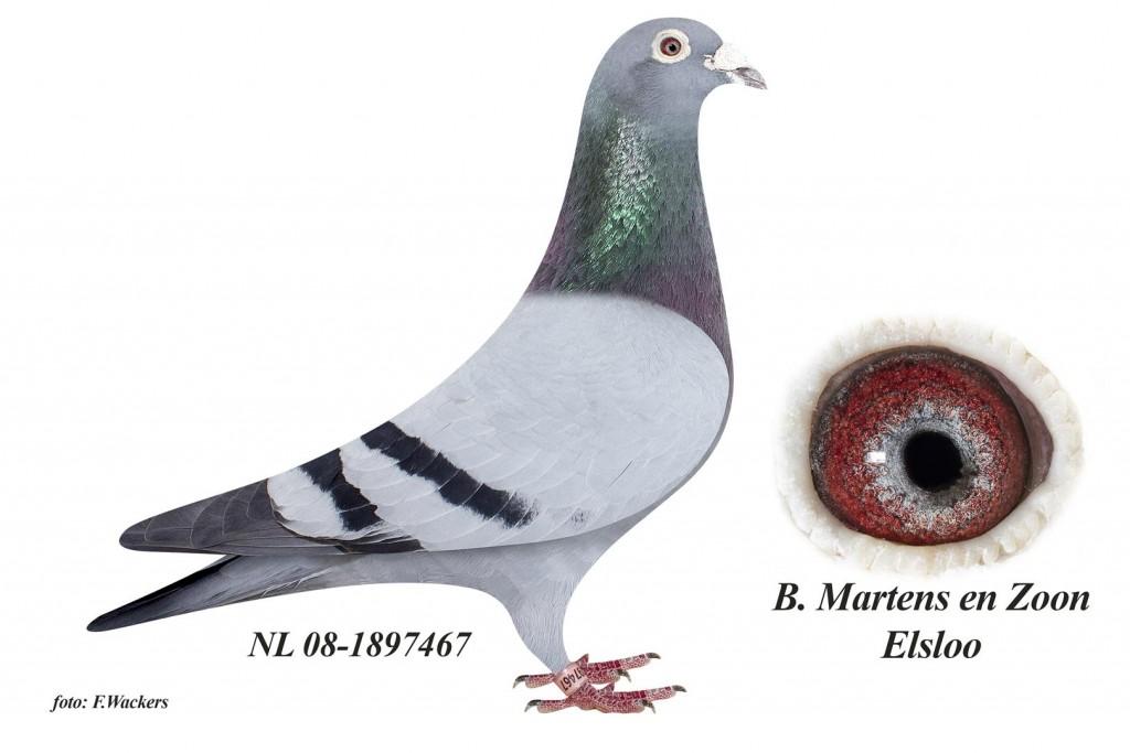 NL08-1897467