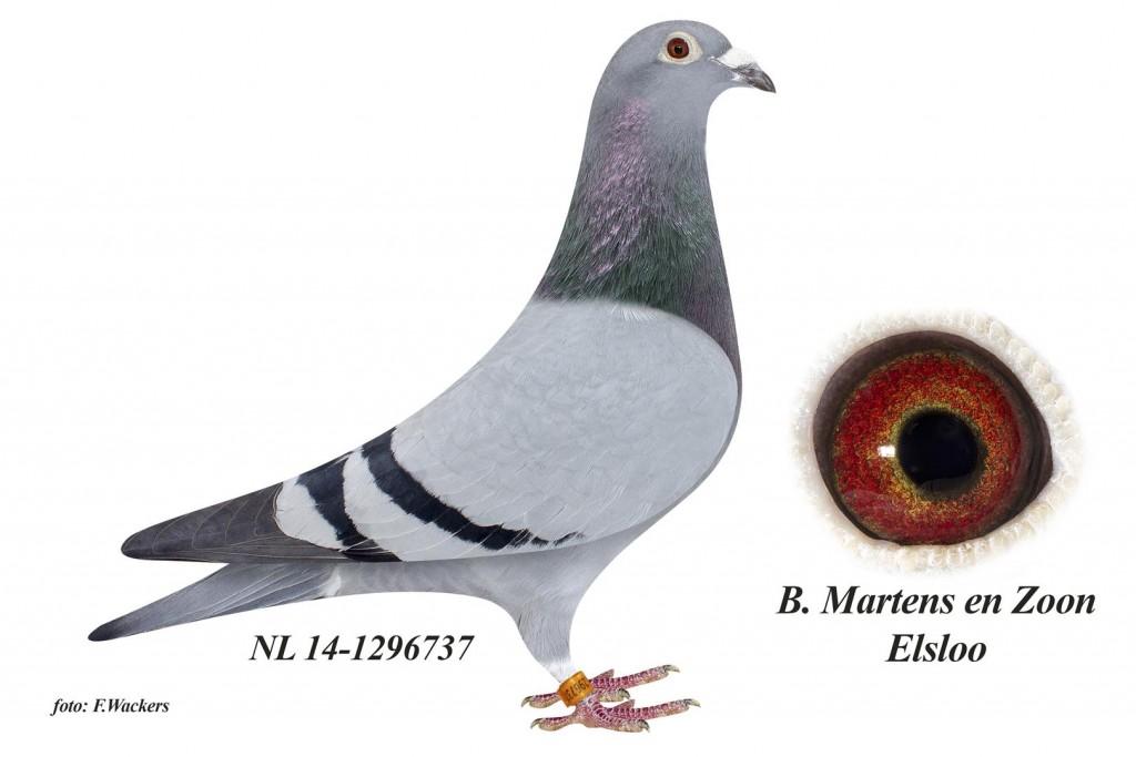 NL14-1296737