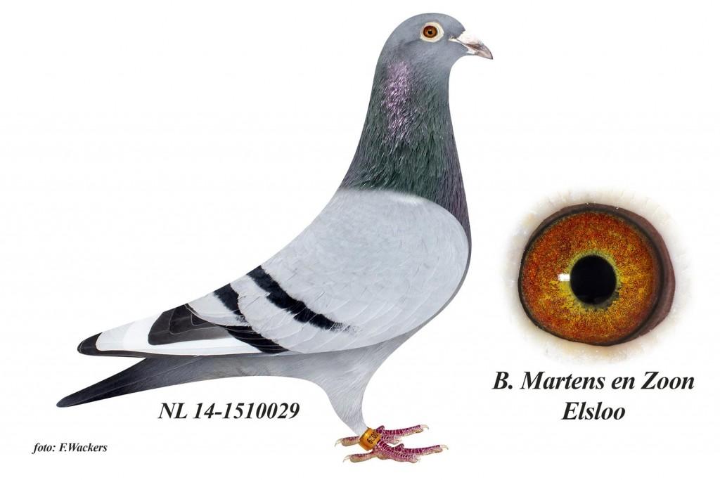 NL14-1510029
