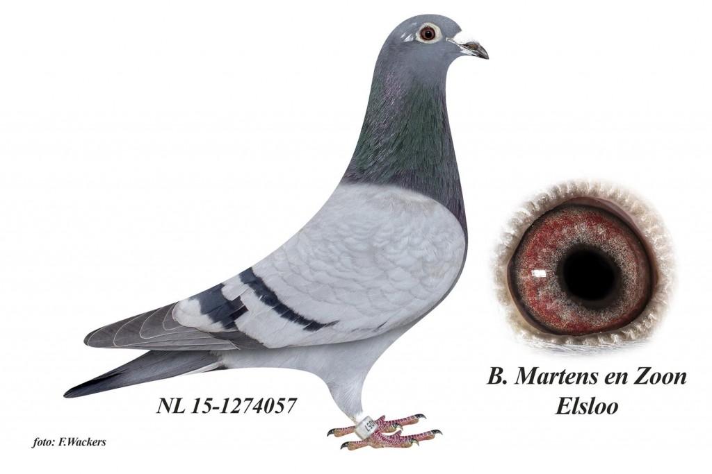 NL15-1274057