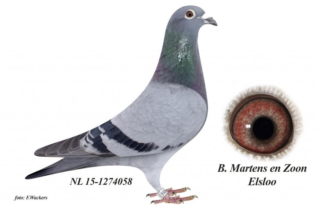 NL15-1274058