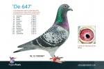 NL12-1880647.jpg